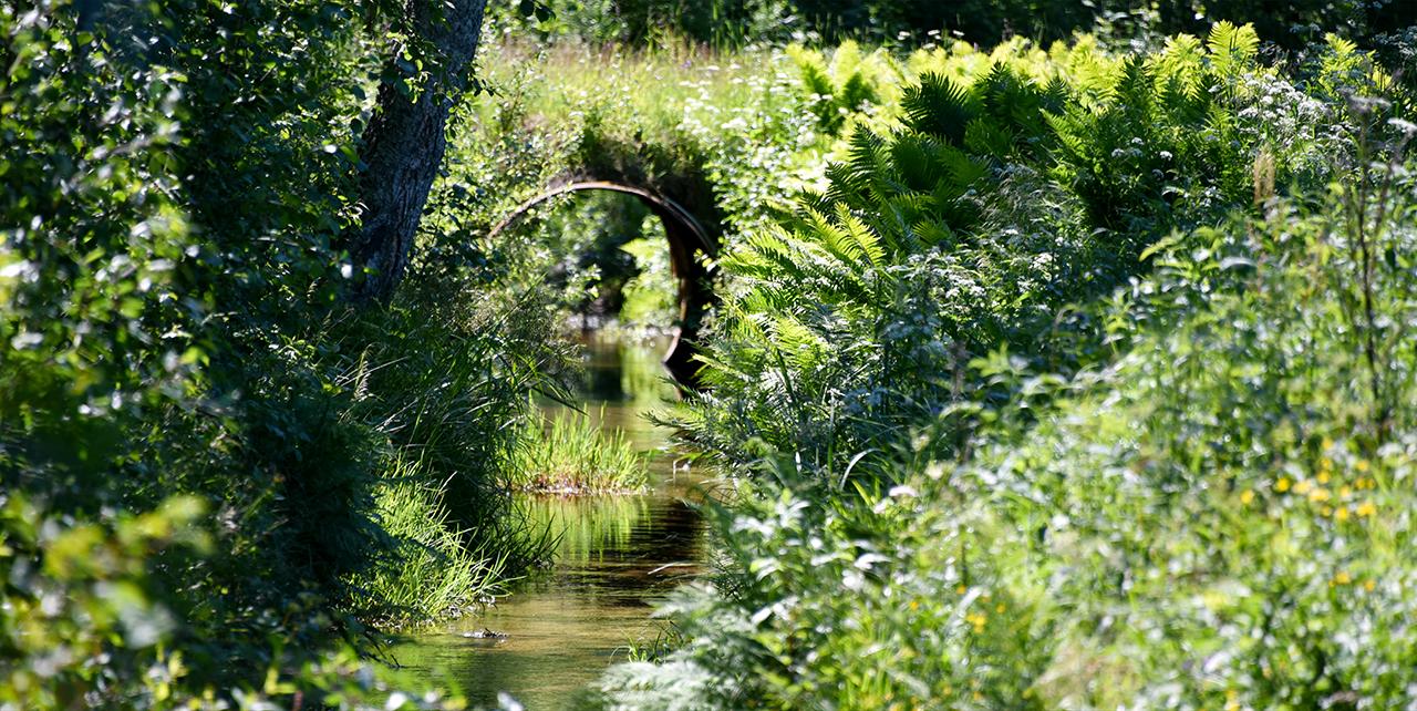 Bild på en å i grönska